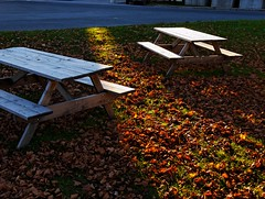 Picnic Benches (Computer Science Geek) Tags: autumn ontario fall lightandshadows seasons bigcalm peterborough flemingcollege utatathursdaywalk28