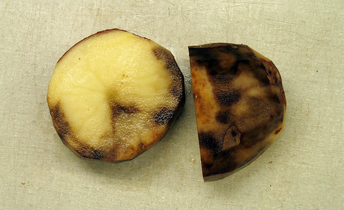 Late blight of potato by Ben·Millett