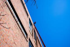 Philadelphia; March 2018 (Daniel Durrans) Tags: window ladder blue brickwall streetphotography candid canpubphoto southstreet street pennsylvania sky man wall brick philadelphia urban