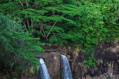 Hawaii USA - Kauai Island. Wailua Falls (Feridun F. Alkaya) Tags: usa hawaiiislands hawaii kauaiisland wailuafalls kauaisspirit forest waimeacanyonstatepark waimea waimeacanyon hawaiiisland ngc landscape canyon road kauaı grass soil aloha worldheritagelist unescoheritagelist unesco unc kohala mauna hualalai kilauea volcanos garden sky flower honolulu waikikibeach beach