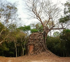 Some trees do not take no for an answer! (bertverspuij) Tags: cambodge cambodja cambodia tree roots kompongthom
