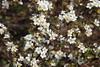 IMG_6879 (Usagi93190) Tags: macro flower biltmore estates greenhouse gardens ashville north carolina