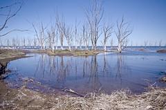 Solitarios (Adri T fotografías) Tags: epecuén provinciadebuenosaires buenosaires abandonado inundado argentina lugaresabandonados abandoned forgotten water reflection