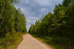 Dense and low woodlands (МирославСтаменов) Tags: russia moscowregion protvino road edge forest cloudscape birch