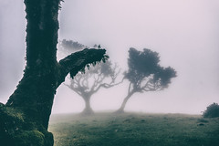 Find your way (**capture the essential**) Tags: 2017 fog insel island laurel lorbeer madeira mist nebel pauldaserralowlands sonye18200mmoss sonynex7 wetter wolkenclouds foggy