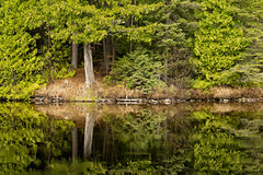 'On Reflection' (Canadapt) Tags: forest lake reflection tree calm keefer canadapt