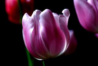 IMGP0273 Blooming