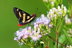 Colorful (Juan Anza) Tags: butterfly wildlifephotographer wildlifepics wildlife naturewatcher naturepics naturelover natureza nature animal animalphotography animalpics coth5