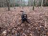 Ready to Play (Pyrolytic Carbon) Tags: hudson hudsonbrunton labrador chocolatelabrador leaves mobile trees