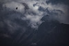 Birds of the wind (Celia G. Photography) Tags: birds nature sky fog foggy winter mountain nikon clouds vulture animals wild