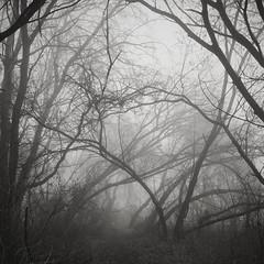 wild chaos (Darek Drapala) Tags: forest fogg chaos panasonic poland polska panasonicg5 park trees tree skaryszewski mood dark lumix light nature bw blackwhite blackandwhite