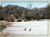 dscn96812-2 (Kelly_Lee_D) Tags: riverfront spring geese frozen montana yellowstone