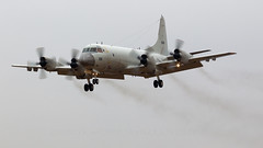 JMSDF P-3C Orion. (spencer_wilmot) Tags: 5055 jasdf prop propliner orion quad japan iruma airbase landing approach grey rjtj plane mpa maritimepatrol aviation lockheed aircraft airplane arrival militaryaviation lockheedkawasaki kawasaki jmsdf 海上自衛隊 japanesenavy p3 p3c p3corion