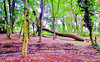 Fallen (Francesco Impellizzeri) Tags: brighton england forest canon landscape trees ngc
