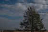 Strabrechtse Heide/Heath of Strabrecht (truus1949) Tags: wandelen strabrechtse heide heeze natuur landschap bomen lucht