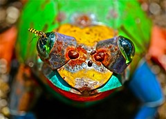 for 7 days with Flickr,  Wednesday: Macro (Dee Gee fifteen) Tags: 7dwf wednesdaymacro frog hoverfly colorful rust