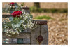 Rest Here & Enjoy The View (Red Tie Photography) Tags: rememberance inmemoryof bench beach whitstable view redtiephotography jonl jonlambert jon niksoftware canon1dx rose babysbreath red