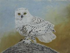 Snowy Owl - Bubo scandiacus (podicep) Tags: snowyowl buboscandiacus strigidae softpastel sennelierpastel owl drawing