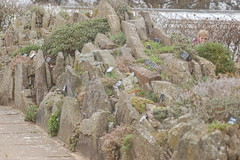 Rockery - 2 (basswulf) Tags: rockery d40 vivitar90mmf25macro lenstagged unmodified 32 image:ratio=32 camerasetting:aperture=f71 permissions:licence=c 20180407 201804 3008x2000 rhs wisley rhswisley