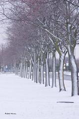 Est-ce le printemps...ou l'hiver? / Is it spring or winter? (Pentax_clic) Tags: imgp4480 mi avril 2018 printemps sping robert warren vaudreuil quebec neige snow arbre