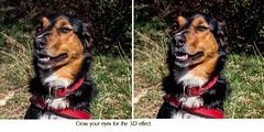 3D Kiri (allybeag) Tags: tallentirehill janet kiri riff dogs sunshine 3d stereoscopic stereo