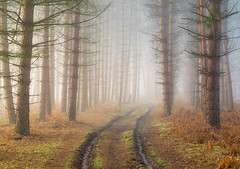 Mystery (jactoll) Tags: coughton alcester warwickshire coughtonpark woods woodland trees fog foggy mist misty mystery mystic sony a7ii jactoll