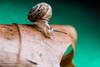 _JRB1843 (yossi rufman) Tags: snails macro d750 nikon tokina 100mm yossi rufman