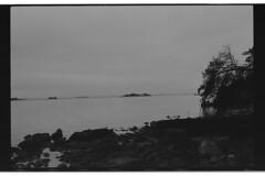P55-2017-025 (lianefinch) Tags: blackandwhite blackwhite noirblanc noiretblanc argentique argentic analogique monochrome bretagne morbihan paysage landscape mer sea golfe nature ocean île island arbre tree roc pierres eau water