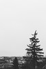 trist ... (Thomas Listl) Tags: thomaslistl blackandwhite noiretblanc biancoenegro trist triste vastness tree sky grey mood atmosphere emptiness silence fade vsco cityscape uprightlandscape