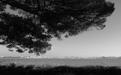Le point de vue !!! (François Tomasi) Tags: charentemaritime larochelle monochrome blackandwhite noiretblanc yahoo google flickr pointdevue pointofview pov photo photographie photography photoshop lights light lumière françoistomasi tomasiphotography reflex nikon france europe tourisme sudouest justedutalent mer sea océan water eau numérique digital arbre tree ciel sky mars 2018