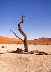 Namibia: Dead Vlei (Exper!ence it) Tags: africa namibia namibnaukluft park sossusvlei dead vlei nature desert hiking 4x4 hot red wood beauty nikon d750