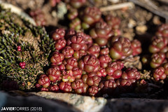Texture (The Whisperer of the Shadows) Tags: texture textura planta plant red rojo macro geotagged nature naturaleza vegetal