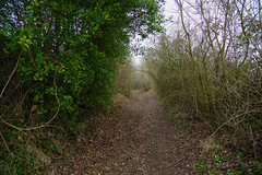 Pain, oh the pain! (favmark1) Tags: pilgrimsway hill steep kent rack trail nationallongdistancetrackway cycle