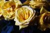 DSC_9017 (PeaTJay) Tags: nikond750 sigma reading lowerearley berkshire macro micro closeups gardens indoors nature flora fauna plants flowers bouquet rose roses rosebuds