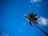 Dahican, Mati, Davao Oriental Coconut (Mark Atong) Tags: dahican mati davaooriental sleepingdinosaur beach subanganmuseum skimboarding municipalbaywalkpark