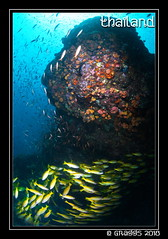 _MG_1771 (Graggs) Tags: blue canon5dmkii diving scuba similanislands thailand uwp underwater underwaterphotography fishball