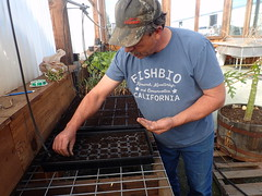 Starting Seeds in the Greenhouse