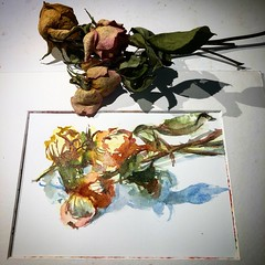 Day 953. The #rose #painting for today. #watercolour #watercolourakolamble #sketching #stilllife #flower #art #fabrianoartistico #hotpress #paper #dailyproject (akolamble) Tags: rose painting watercolour watercolourakolamble sketching stilllife flower art fabrianoartistico hotpress paper dailyproject