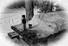 Kalliojärvi - Joensuu (Sami Niemeläinen (instagram: santtujns)) Tags: kalliojärvi suomi joensuu finland luonto nature metsä forest pohjoiskarjala north carelia bw monochrome mustavalkea termospullo thermos