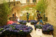 Temps de flors_0261 (Joanbrebo) Tags: girona catalunya españa es tempsdeflors tempsdeflors2017 canoneos80d eosd efs1018mmf4556isstm autofocus