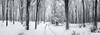 8856--8865 (gcu_sketcher) Tags: xt1 xf1655 winter snow woods woodland trees morning somerset panorama pano ptgui monochrome bw silverefexpro