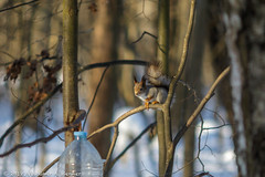 2018-03-19-08-29-05-7D2_3978 (tsup_tuck) Tags: 2018 march moscow spring woods