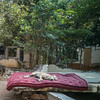 lazy dog (sami kuosmanen) Tags: hampi hauska funny fun dog koira india intia travel sleep animal asia