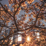 Spring time in Bellevue thumbnail