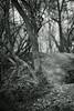 walking path 6 (Amselchen) Tags: woods plants season spring light shadow bnw blackandwhite mono monochrome bokeh blur dof depthoffield trail path sony a7rii alpha7rm2 sonyilce7rm2 samyang 85mmf14