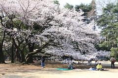 桜空ももの壁紙プレビュー