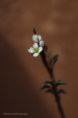 Stand alone (TiffanyLouisePhotography) Tags: garden pot soft focus softfocus spring small macro detail floral flower