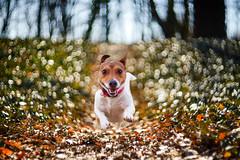 Madness in eyes and in background (Radosław Owczarczak) Tags: dog jrt poznań poland sołacz parl pup littledoglaughedstories