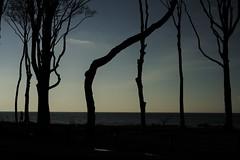 Gespensterwald (Karsten Höhne) Tags: nienhgen ostsee wald bäume wasser meer strand