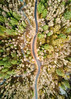 Let The Road Be Your Guide (John Westrock) Tags: road trees nature forest curves washingtonstate pacificnorthwest djimavicpro dronephotography aerial northbend washington unitedstates us